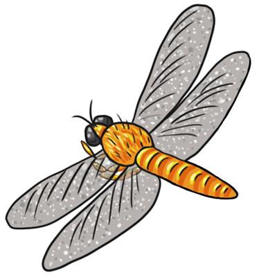 Free Dragonfly Clip Art 14