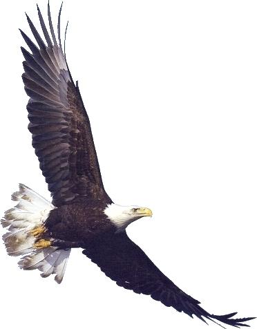 Free Eagle Clipart Free .