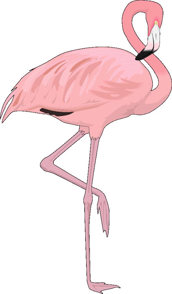 Free Flamingo Clip Art u0026middot; flamingo4
