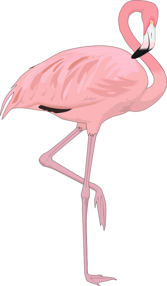 Free Flamingo Clip Art u0026middot; flamingo4