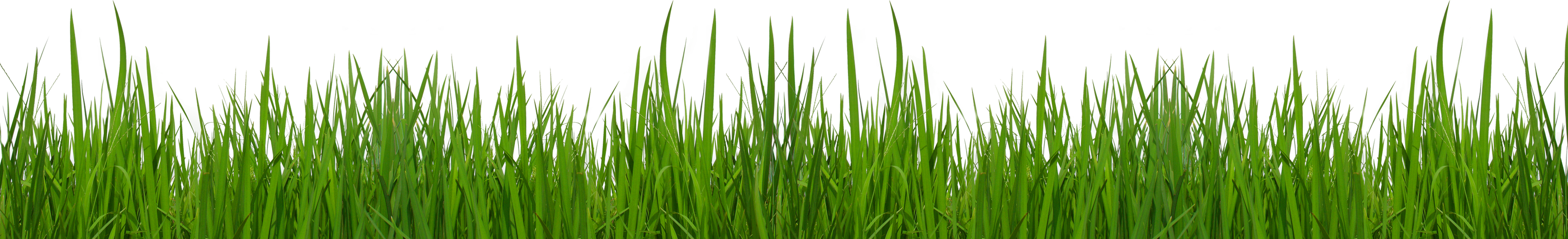 Free grass clip art pictures