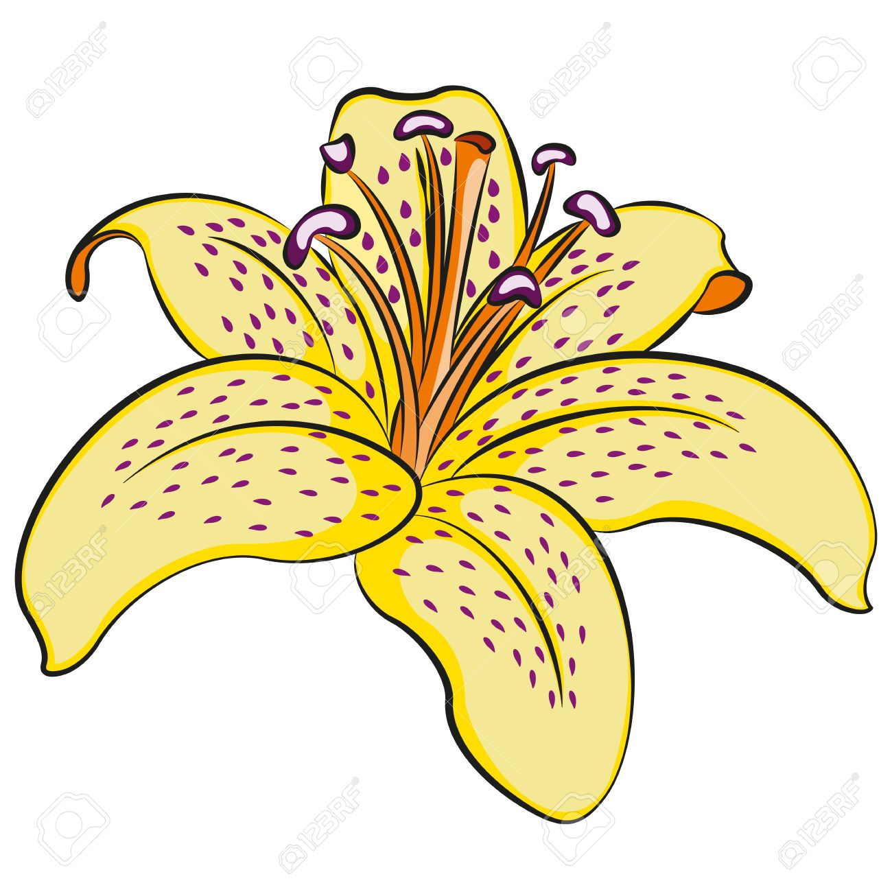 Free lily clipart .