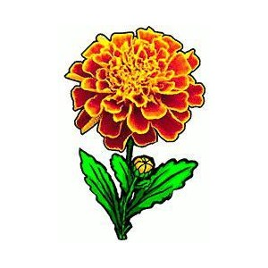 Free Marigold Clipart