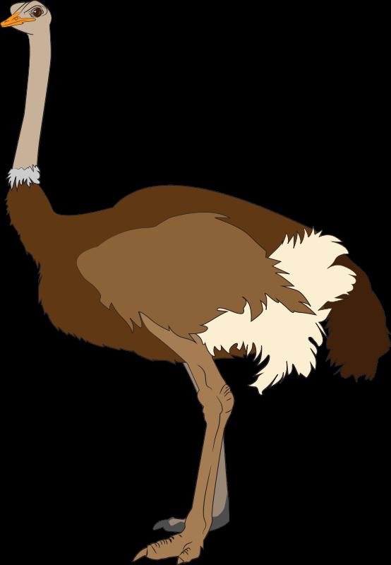 Free Ostrich Clip Art u0026middot; ostrich6