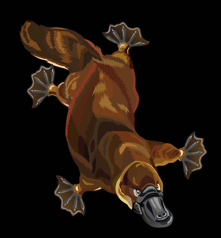 Free Platypus Clip Art u0026middot; platypus4