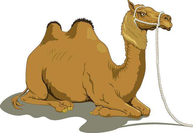 Free Realistic Camel Clip Art