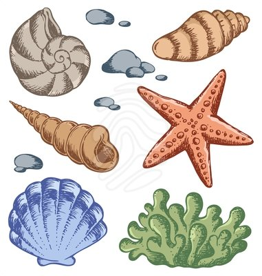 Free seashells clipart free clipart images cliparts and others 2