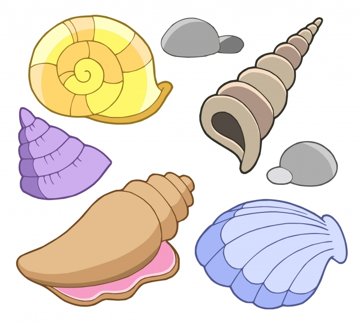Free seashells clipart free clipart images cliparts and others. Free  seashell cliparts the cliparts