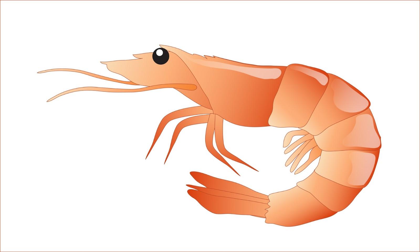 Free shrimp clipart 1 page of public domain clip art image