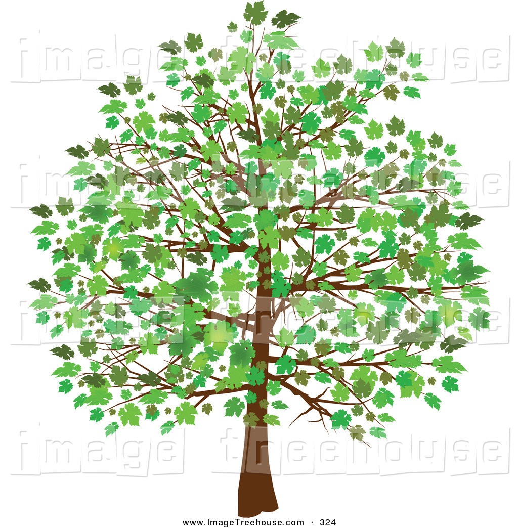 Free Tree Clip Art Downloads Clipart Of A Grown Tree With Green
