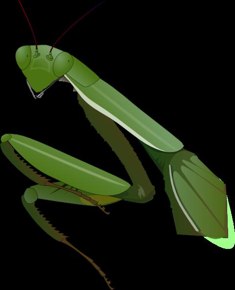 ... free vector Praying Mantis clip art
