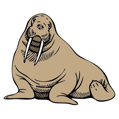 Free walrus clip art a graphics