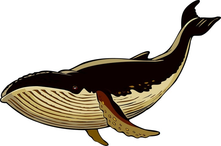 Free whale clipart 2