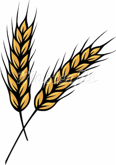Free Wheat Clipart