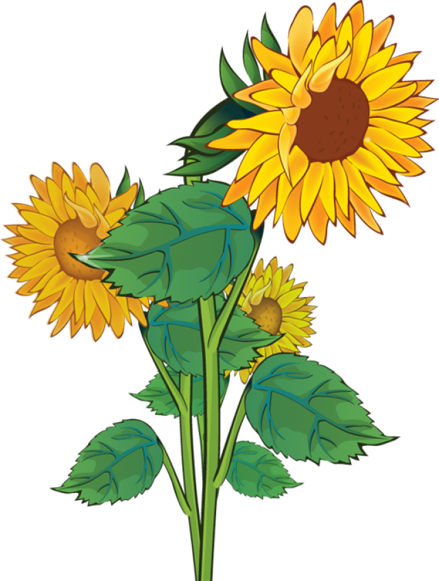 Gallery For Rustic Sunflower Clip Art