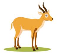 african gazelle clipart. Size: 61 Kb