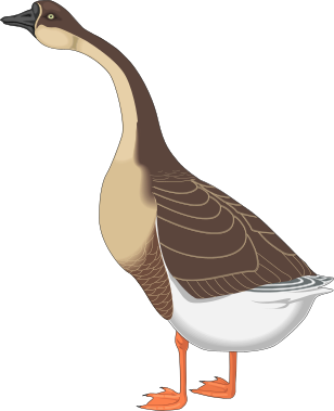 Goose Clipart Animals Birds G Geese Canadian Geese Canadian Goose