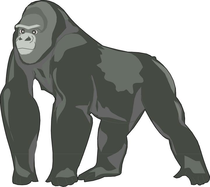 Gorilla Clipart-Clipartlook.com-720