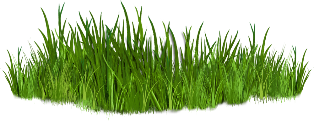Clip Art Images Of Grasses 7  - Grass Clipart