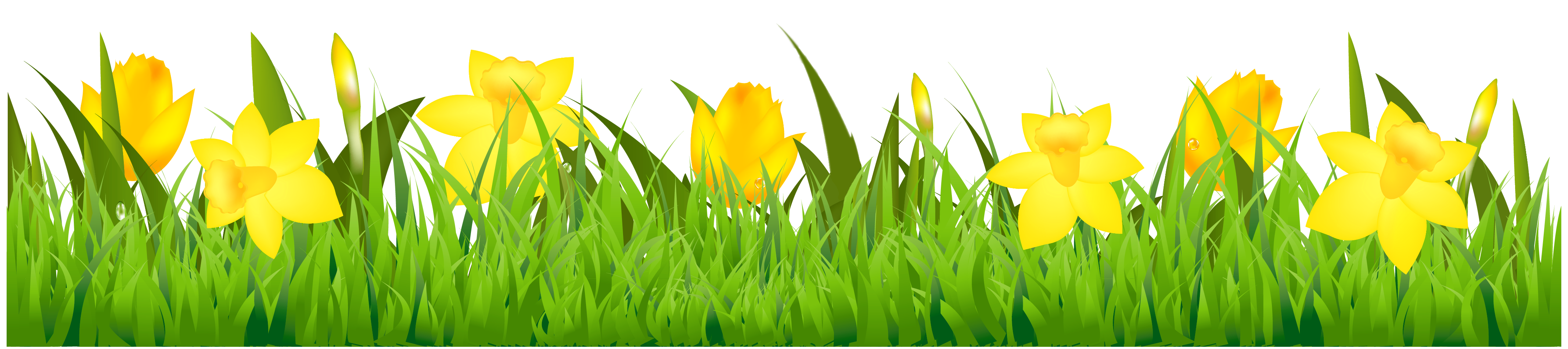 Grass with Daffodils PNG Clipart