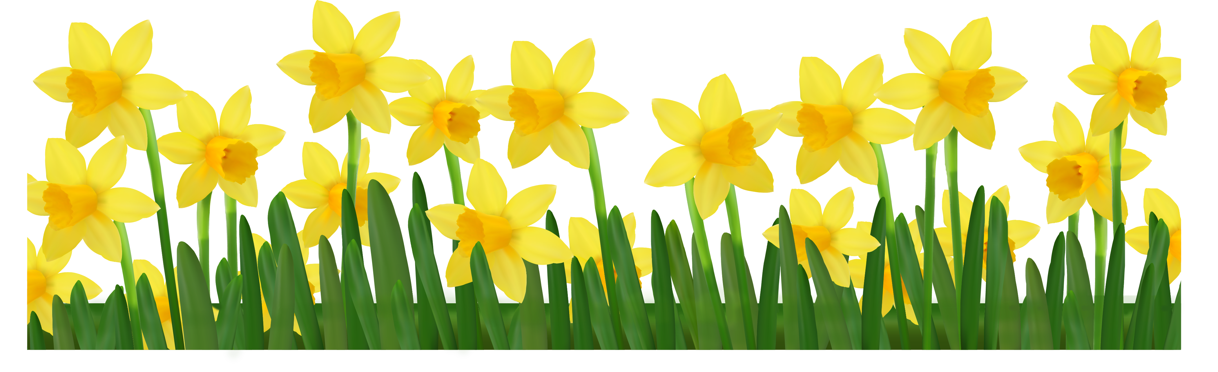 Grass With Daffodils Png Clipart Picture