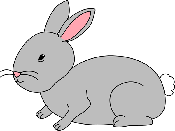 Gray Bunny Rabbit