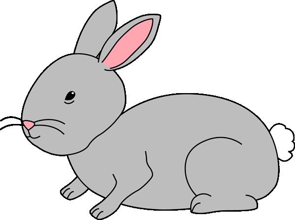 Gray Bunny Rabbit