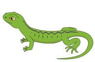 green lizard. Size: 43 Kb