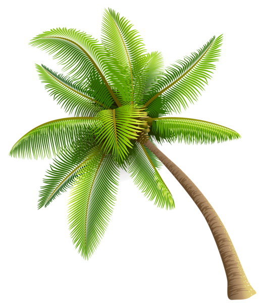 Green Palm Tree PNG Clipart