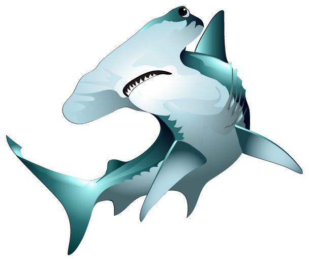... hammer shark clipart; Hammerhead Illustration, Vector Clipart, Vector Saltwater, Saltwater Sport, Saltwater Fish, Illustrations ...