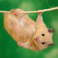 hang in there funny photo: Hang in there Hanginthere2_zpsa19f491c.jpg