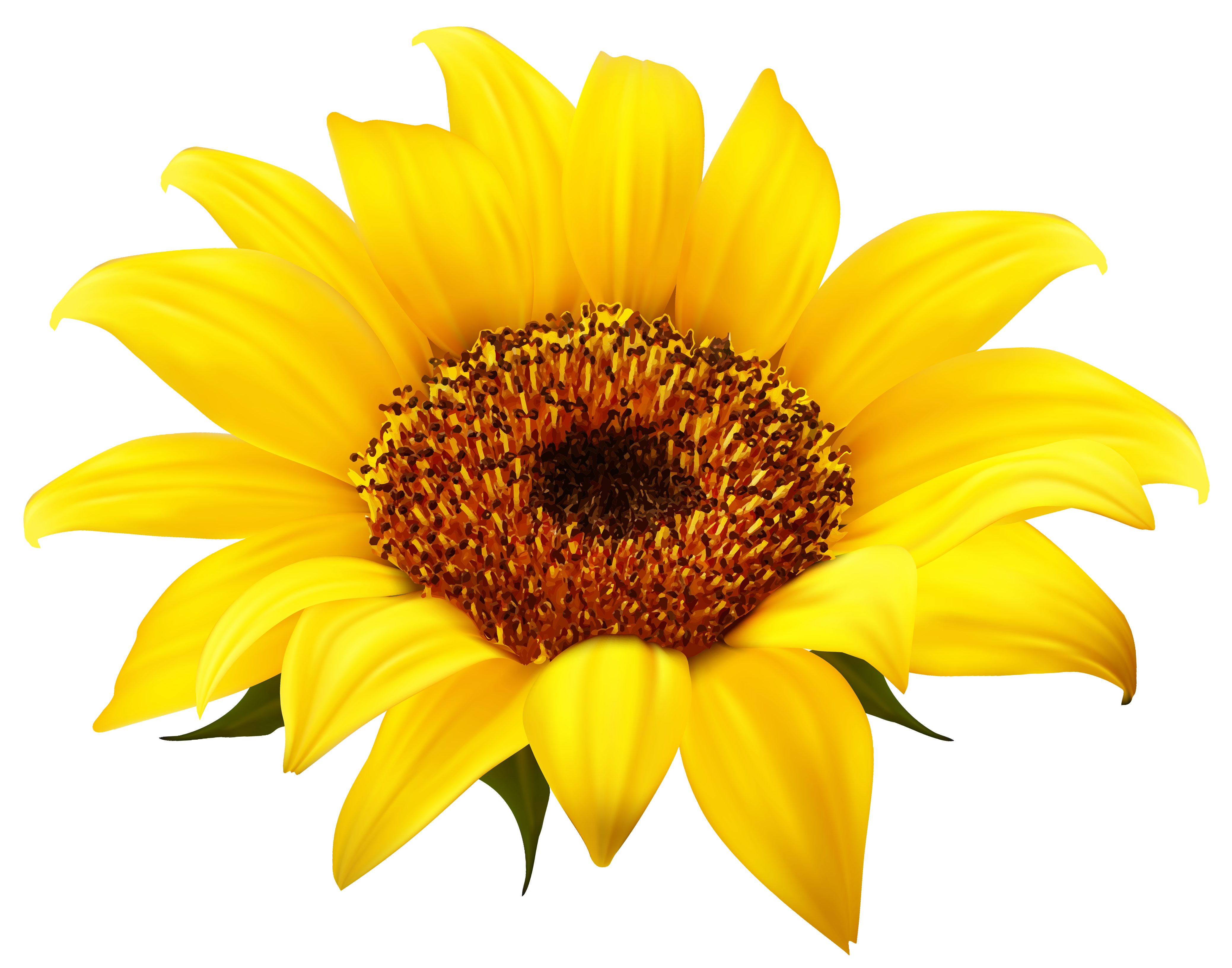 Happy sunflower clipart free clipart images clipartbold
