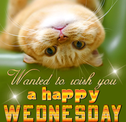 Happy Wednesday Cat .