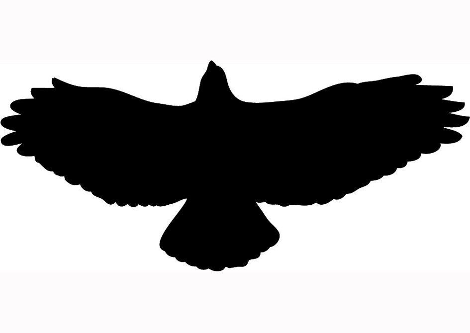 Hawk silhouette black flying ...
