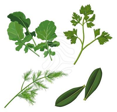 Clipart Herbs Clipart