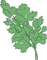 Free Herbs Clipart