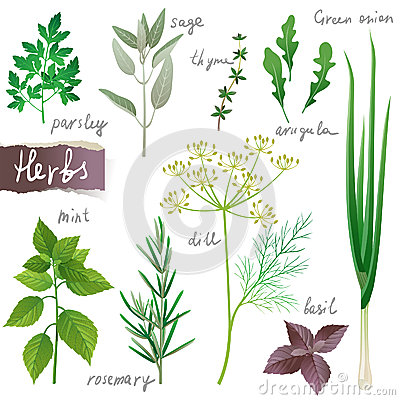 herb clipart