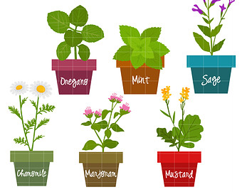 Herbs And Spices Clipart #1