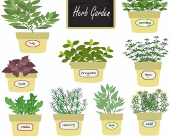 Herbs And Spices clipart herb garden #1
