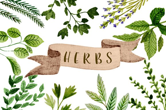 Herbs clipart - Graphics