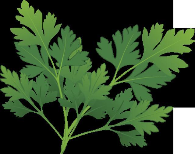 Herbs clipart herb garden #7