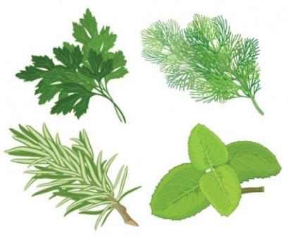 Herbs clipart herbal #1