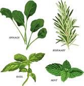 Herbs; Herbs