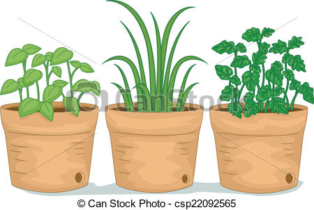 Potted Herbs - csp22092565