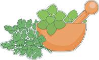 thyme growing in planter herb clipart. Size: 127 Kb