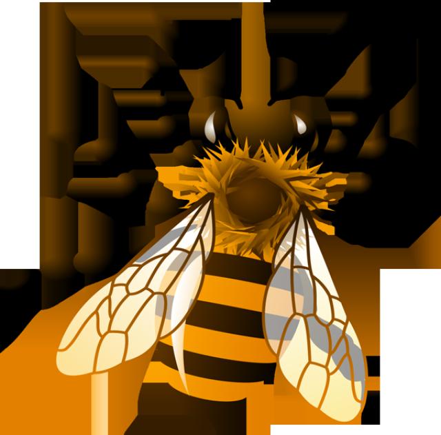 Honey Bee Clip Art Images .