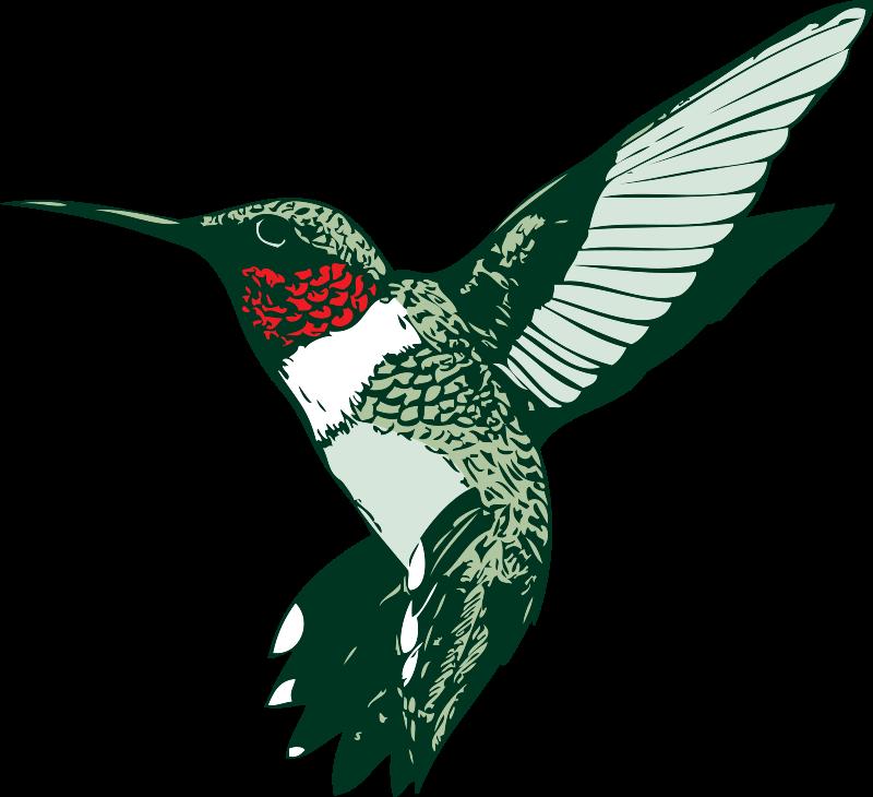 Hummingbird Clipart-Clipartlook.com-800