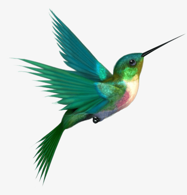 a hummingbird, Hummingbird Clipart, Hummingbird, Green PNG Image and Clipart