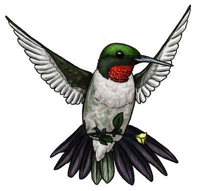 Hummingbird Clipart Free - Cliparts.co