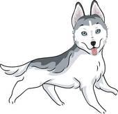 Siberian husky · Siberian Husky